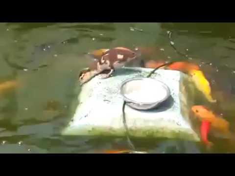 Balık Nasıl Beslenir