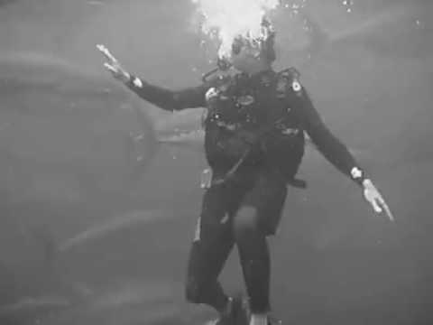 Ton Balıklarının Arasında Yüzmek