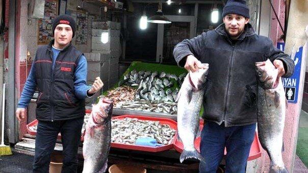 Kastamonu Ağlara Takılan 15 Kiloluk 3 Levreğin Şaşkınlığını Yaşıyor