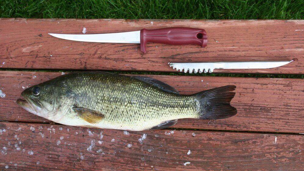 Balık Nasıl Temizlenir?