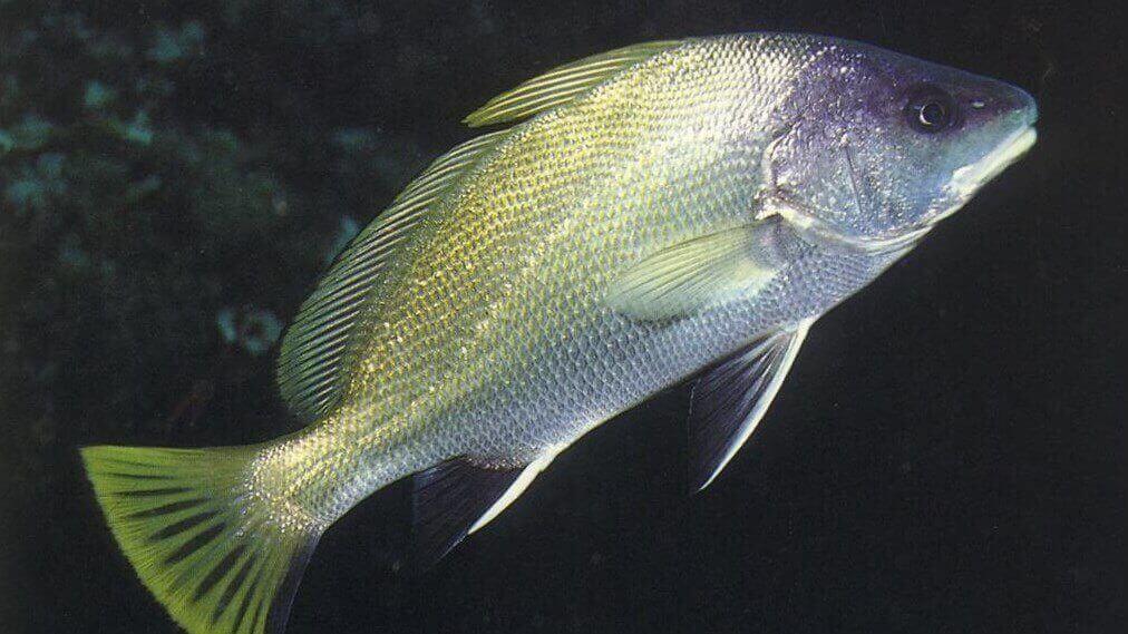 Eşkina Balık Taşı Böbrek Taşını Düşürür Mü?