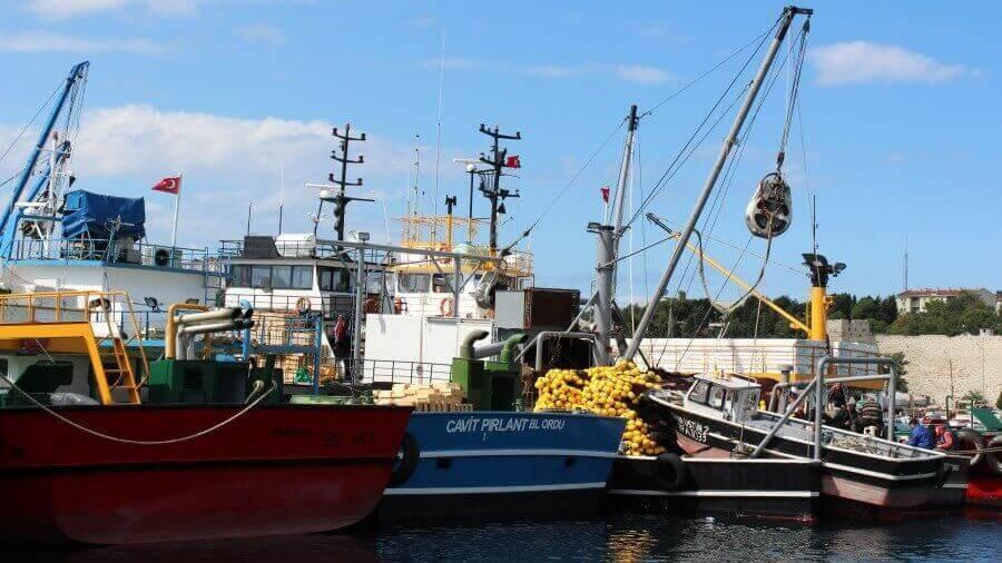 Karadeniz, Nesli Tükenen Balıkları İçin Çözüm Arıyor