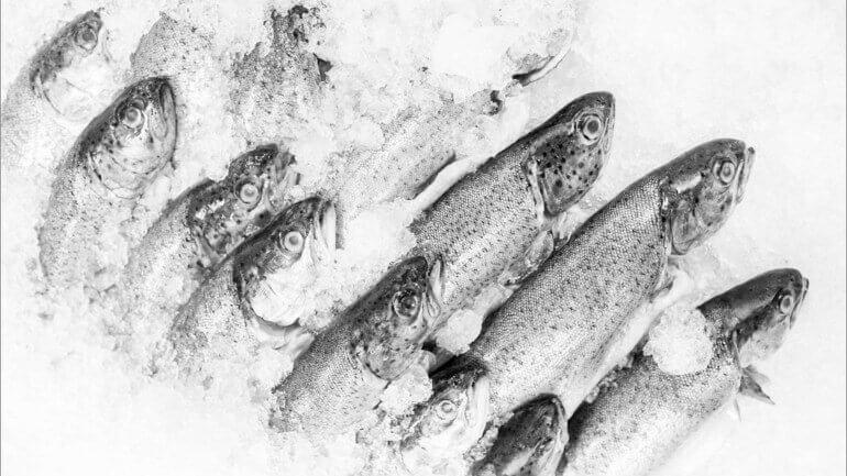 Buzlukta Balık Saklamak Zararlı Mı?
