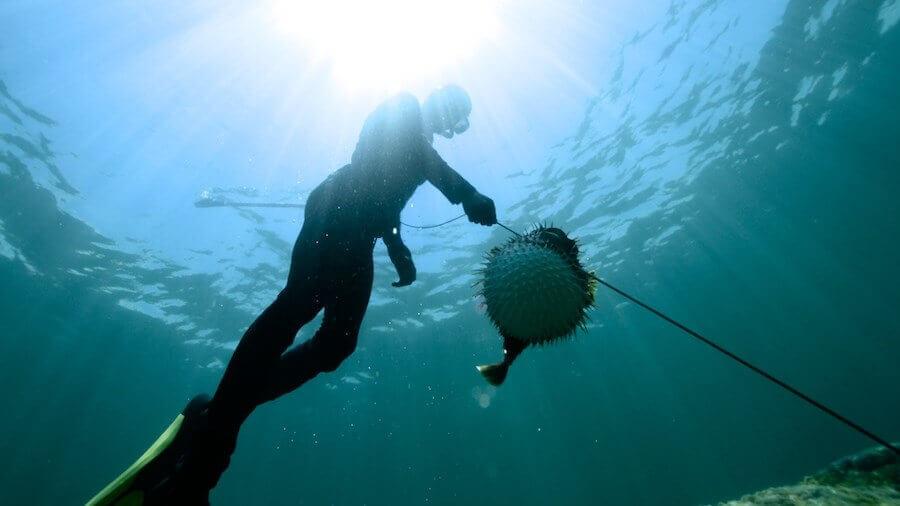 Zıpkınla Balık Avı Hakkında