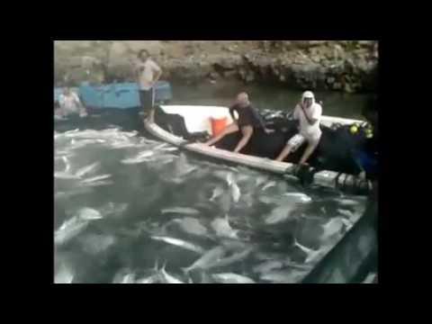 Açık Büfe Balık Avı Diye Buna Denir